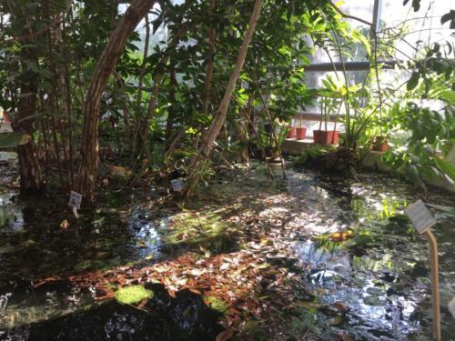 Orto Botanico (20/12/2017)
