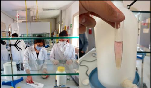 Estrazione del DNA (13/5/2021)